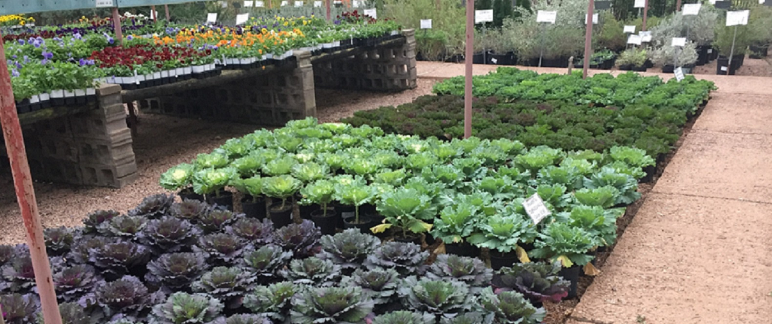 San Angelo Tx Landscaping Company Plant Nursery